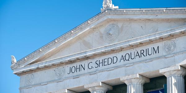 Shedd Aquarium | Hotel EMC2
